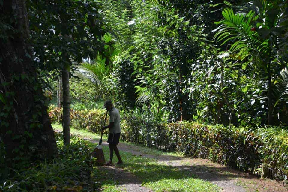A man is cleaning and gardening in Plantation Villa Resort in Kalutara