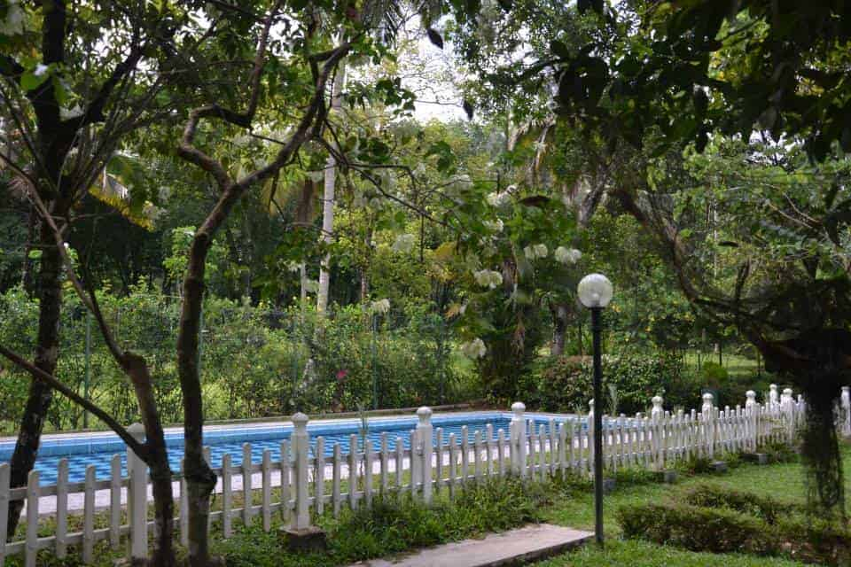 Swimming pool in tree forest in Plantation Villa Resort.