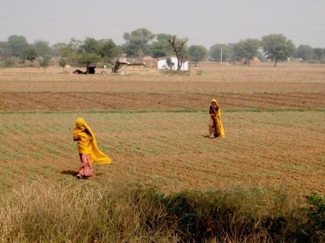 Rajasthan (Jaipur), countryside women with yellow dress.