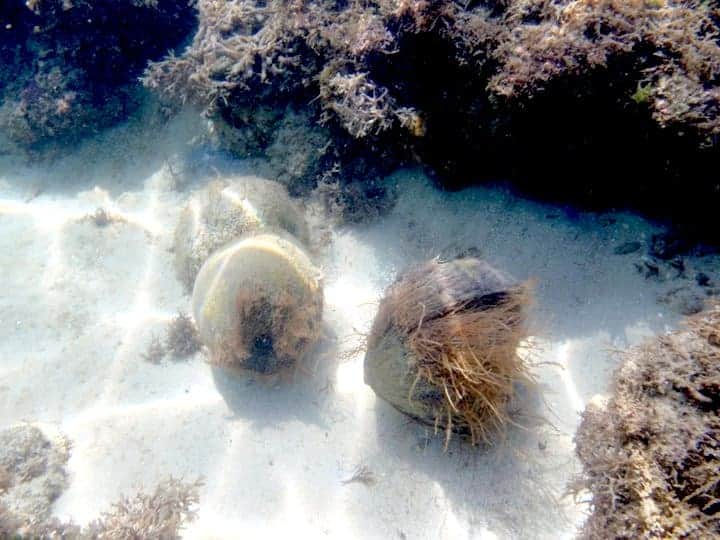 Coconut shells on the bottom of the sea