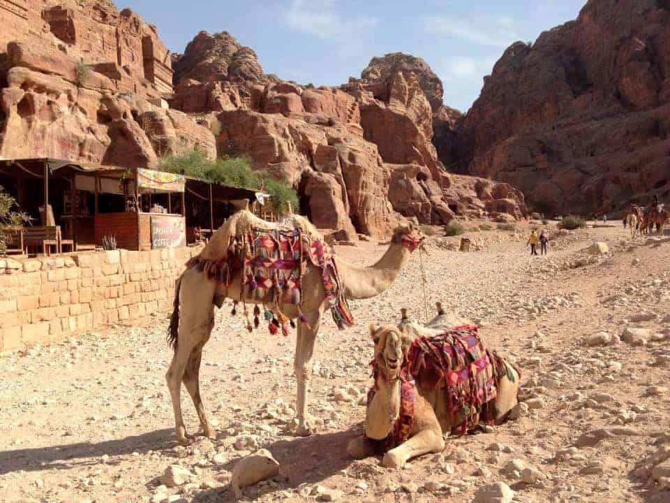 camels in petra in Jordan