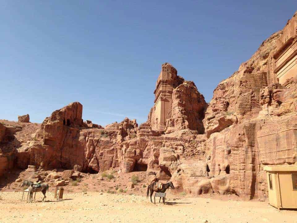 Donkeys in petra in jordan
