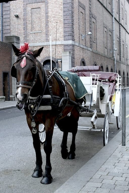 Horse outside of Guinness Experience storehouse