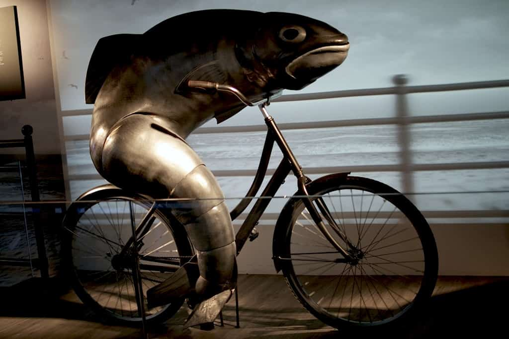 A dolphin in a bicycle