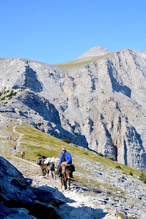 A man wearing a blue jacket on a donkey climbing a mountain.