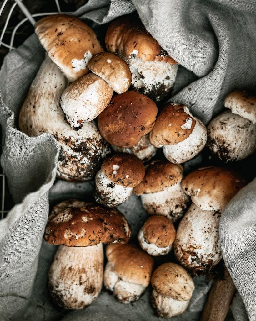Mushrooms in a grey paper